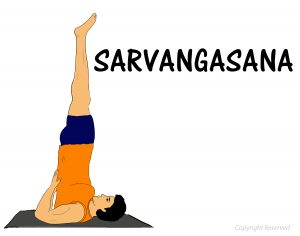 sarvangasana how to do benefits precautions  101yogasan